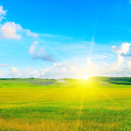 Green field, sun and blue sky. Agricultural landscape. 版權商用圖片