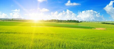 Green field, sun and sun on blue sky. Agricultural landscape. Wide photo.