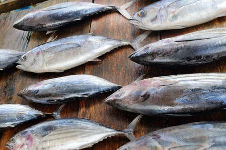 Fresh tuna in the traditional market. Sri Lanka. Imagens