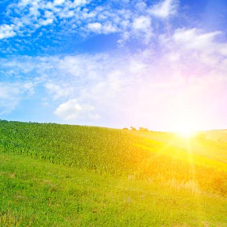 Bright sunrise over green field.