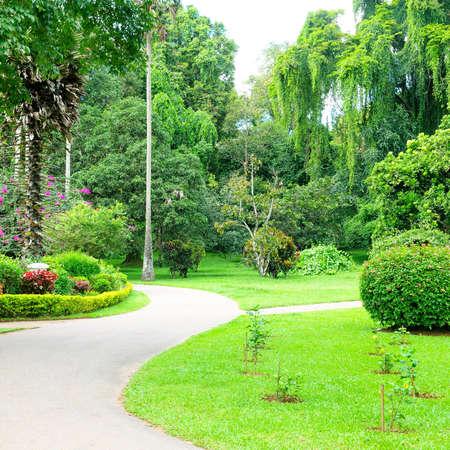 Peradeniya Royal Botanical Gardens - Kandy - Sri Lanka.