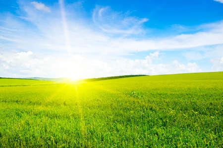 Green field, sun and blue sky. Agricultural landscape. Zdjęcie Seryjne