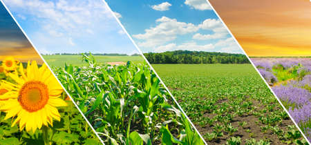 Panoramic view of green field and blue sky with light clouds. Collage.Wide photo.