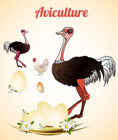 aviculture: Ostrich farm. Ostrich eggs. Poultry. Aviculture. Vector illustration.