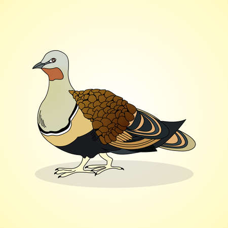 aviculture: Black-bellied sandgrouse. Aviculture. Vector illustration.