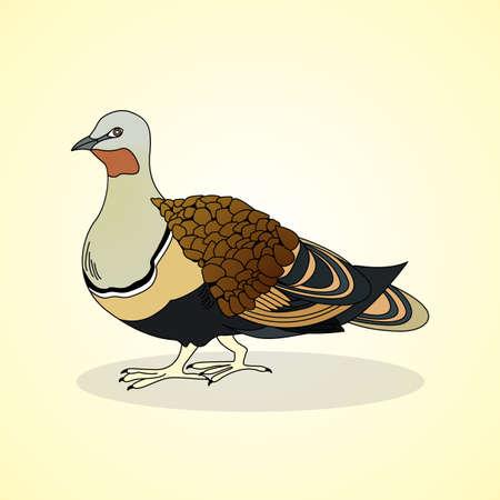 cockscomb: Black-bellied sandgrouse. Aviculture. Vector illustration.