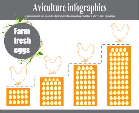 aviculture: Aviculture infographics. Poultry. Vector illustration.