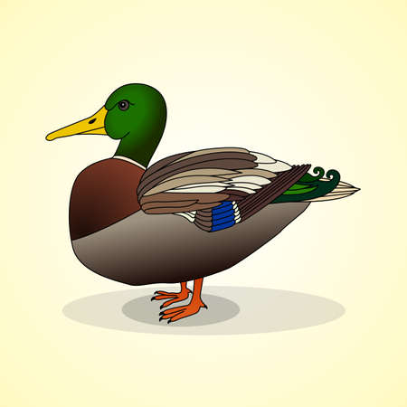 aviculture: Duck. Aviculture. Vector illustration.