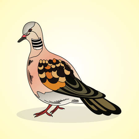 aviculture: Turtledove. Aviculture. Vector illustration.