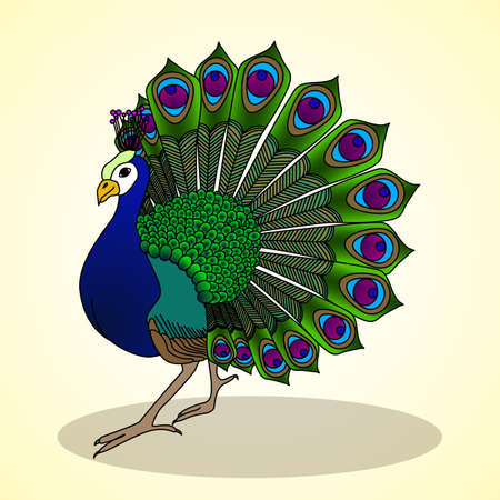 aviculture: Peacock. Aviculture. Vector illustration.