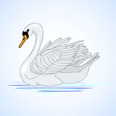 aviculture: Swan. Aviculture. Vector illustration.