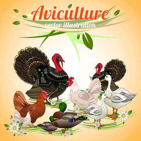 aviculture: Birds set. Set of poultry. Aviculture. Vector illustration.