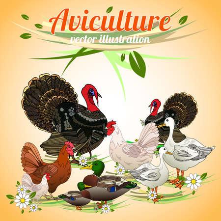 pet breeding: Birds set. Set of poultry. Aviculture. Vector illustration.