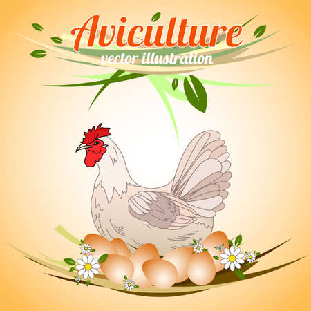 aviculture: Hen with eggs. Poultry. Aviculture. Vector illustration.