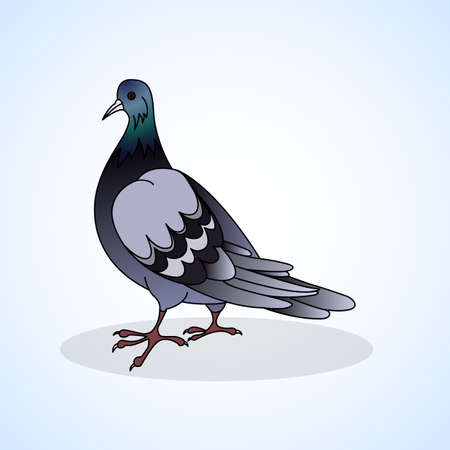 aviculture: Dove. Aviculture. Vector illustration.
