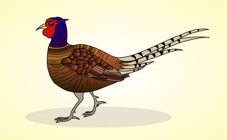 aviculture: Pheasant. Aviculture. Vector illustration. Illustration