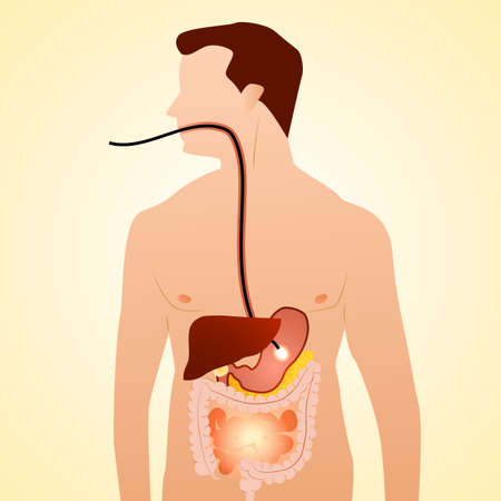 Gastrointestinal tract in gastroenterology. Taking care of the stomach and liver, and human treatment of diseases associated with it. Vector illustration. Illustration