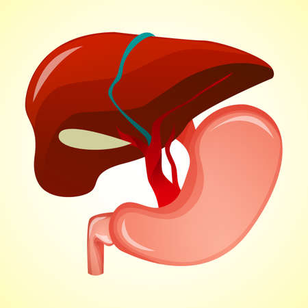 alimentary tract: Gastrointestinal tract in gastroenterology. Taking care of the stomach and liver, and human treatment of diseases associated with it. Vector illustration. Illustration