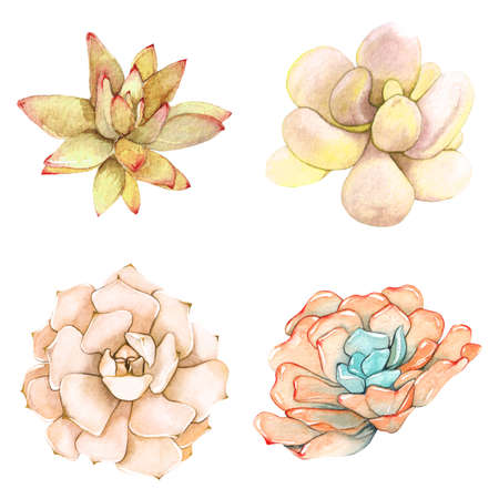 agave: A set of watercolor compositions made of succulent flowers.