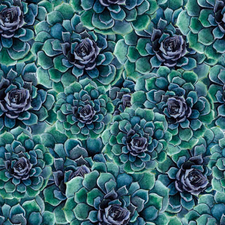 Watercolor seamless pattern of delicate succulent flowers.