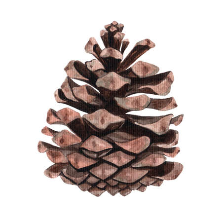 Watercolor pine cone for decoration.