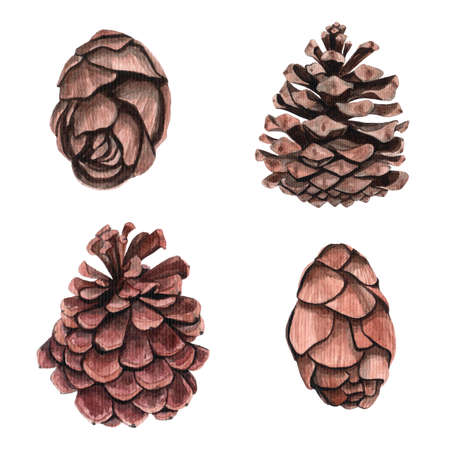 Watercolor pine cone for decoration. Hand drawn watercolor illustration botanical, painting.