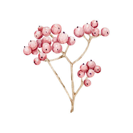 Watercolor floral berries for decoration Reklamní fotografie