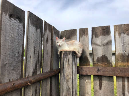 A white cat sitting on a wooden fence