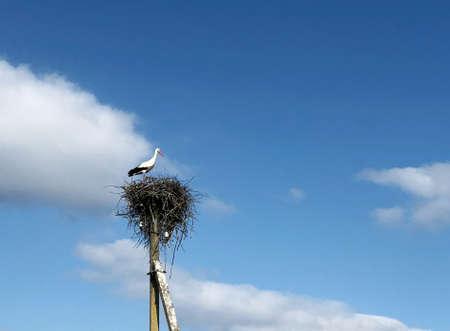 adult bird stork, sitting in a retinue of twigs nest. summer village wildlife background.
