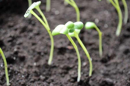 Green sprout growing from seed. Spring symbol, concept of new life Фото со стока