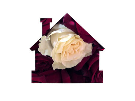 Natural rose flowers. One white rose among red roses. Individuality, outstanding, uniqueness, independence. Shot through the cut-out silhouette of the house Foto de archivo