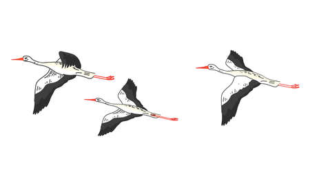 A flock of cranes on a white background. Vector illustration.