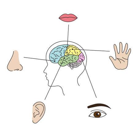 Human organs on white background. Vector illustration. Illustration
