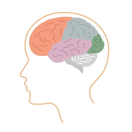 Areas of the human brain. Vector illustration.