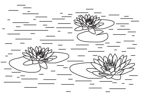 Lotuses on the water. Sketch Vector illustration.