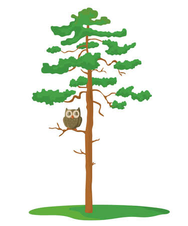 Owl sits on a pine tree on a white background.