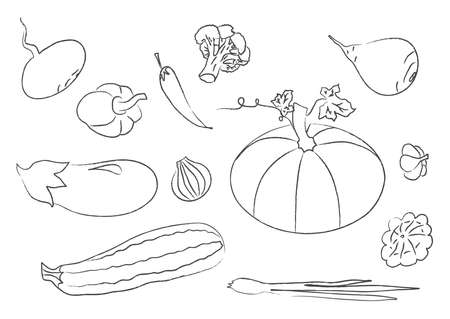 Vegetables collection on white background. Vector illustration.