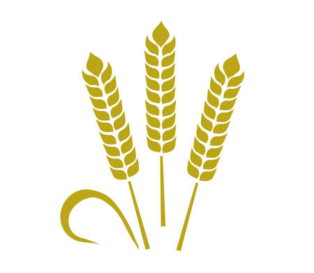 Wheat ears on a white background. Vector illustration.