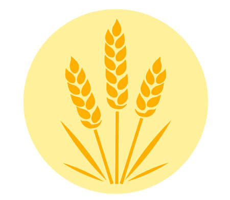 Wheat ears on the background. Vector illustration.