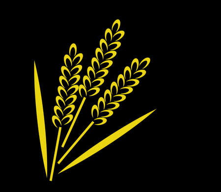 Ears of wheat on a black background. Vector illustration.