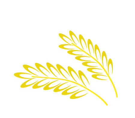 Wheat ears on a white background. Element Vector illustration.