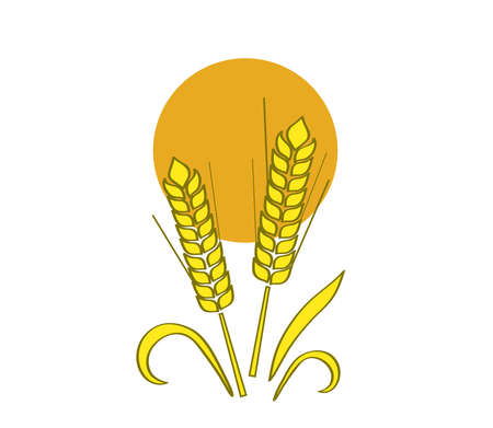 Ears of wheat in the sun on a white background. Vector illustration.