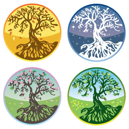 spring summer: Tree in four seasons - spring, summer, autumn, winter.