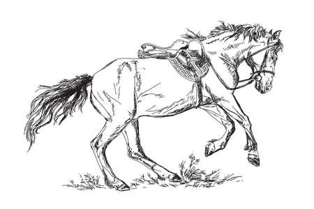 Vector Mustang  in gallop Illustration