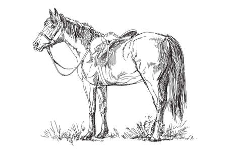 Vector illustration: Horse with saddle and bridle 向量圖像