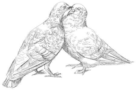 lovers Pigeons kissing, vector  Illustration