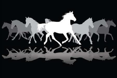 herd: Trotting white and grey horses silhouette on black background vector illustration Illustration