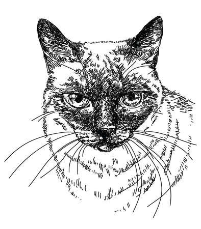 siamese: Siamese Cat head vector hand drawing illustration