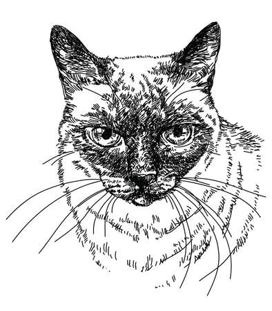 Siamese Cat head vector hand drawing illustration