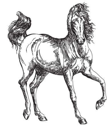 Arabisches Pferd Hand in Vektor-Zeichnung, Illustration